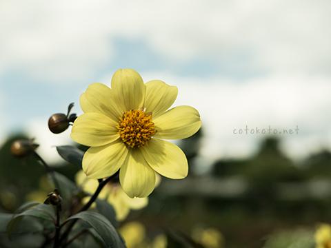 autumn_yellow